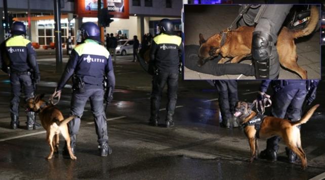 Hollanda polisinin 'köpekli' saldırısında 7 kişi yaralandı