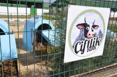 6 soruda Çiftlik Bank: On binlerce kişi nasıl dolandırıldı?