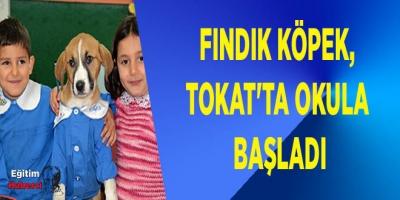 Fındık köpek, Tokat'ta okula başladı