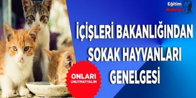 İçişleri Bakanlığından Sokak Hayvanlarına Yardım Genelgesi